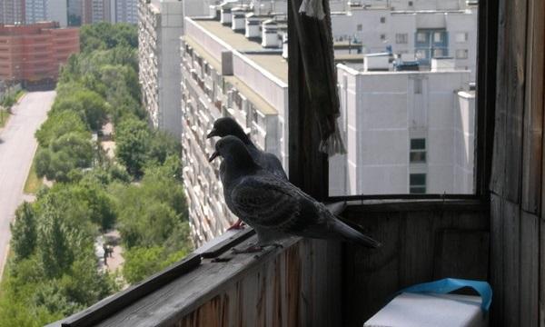Сон про балкон с голубями